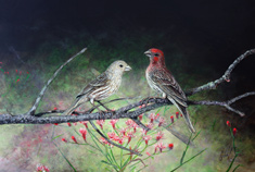 Male & Female House Finch