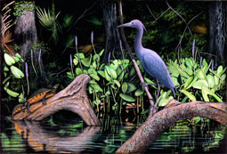 Little Blue Heron and Red-bellied Turtles
